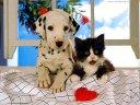 foto-cani